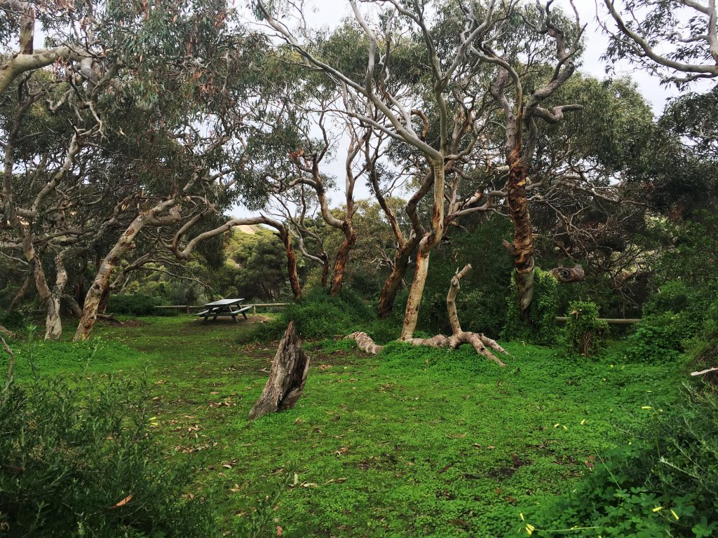 Picnic area at Waitpinga Campground at Newland Head Conservation Park