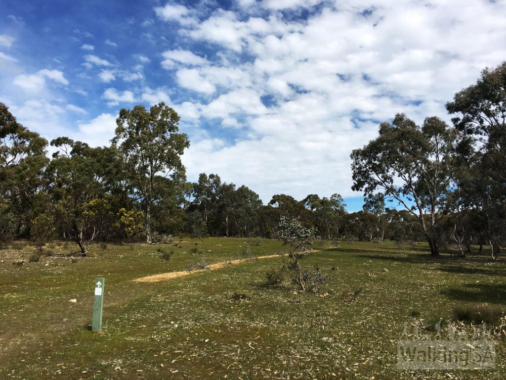 Stringybark Hike in Kaiserstuhl Conservation Park