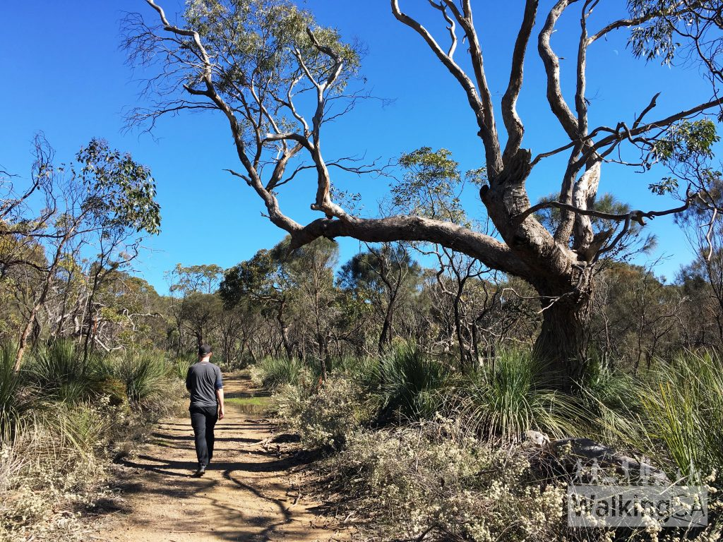 Walking on the Heysen Trail through Kaiserstuhl Conservation Park