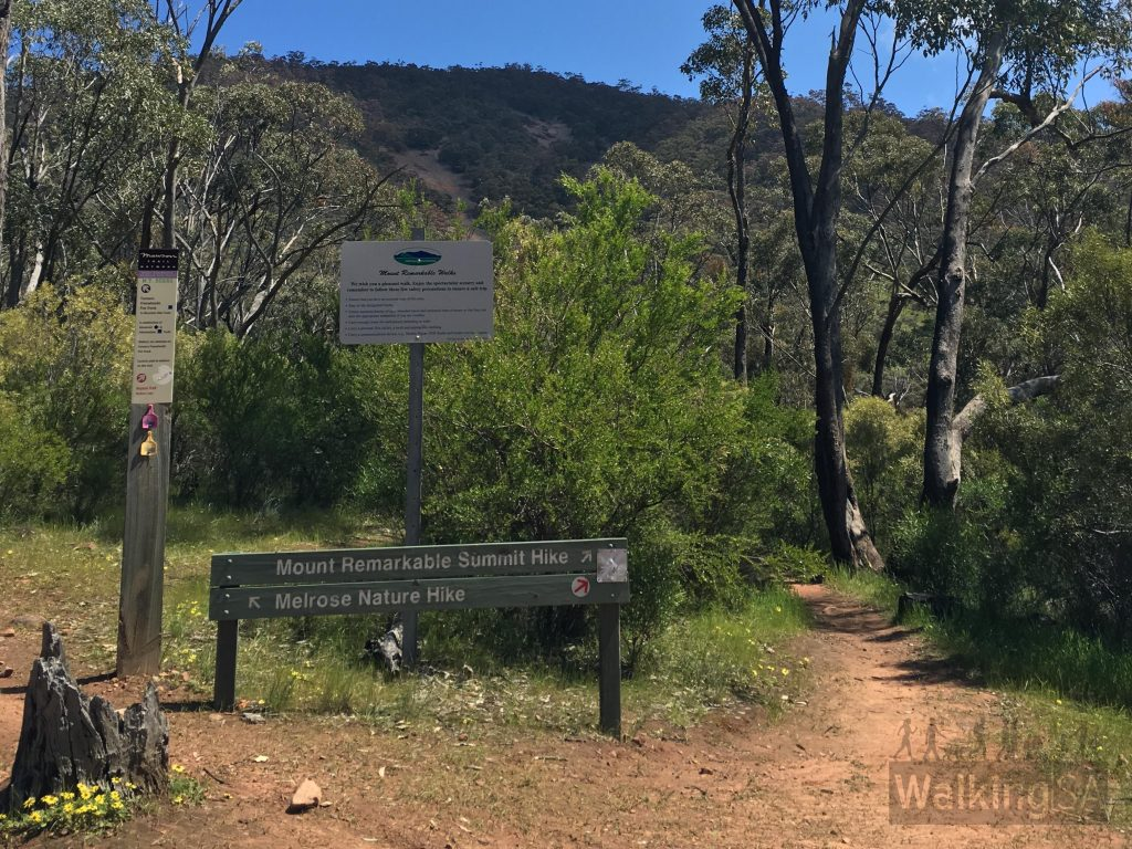 Shortly after leaving the Monument, the Melrose Nature Hike goes left, whilst the Heysen Trail and the Mt Remarkable Summit Trail goes right. Walking left, follow the Farmers Freewheelin Fun Track