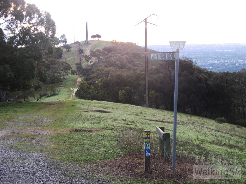Walking along Long Ridge, looking back to Sugarloaf Lookout