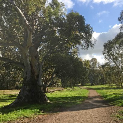 Melrose to Wilmington Cycle and Walking Track (Southern Flinders Rail Trail)