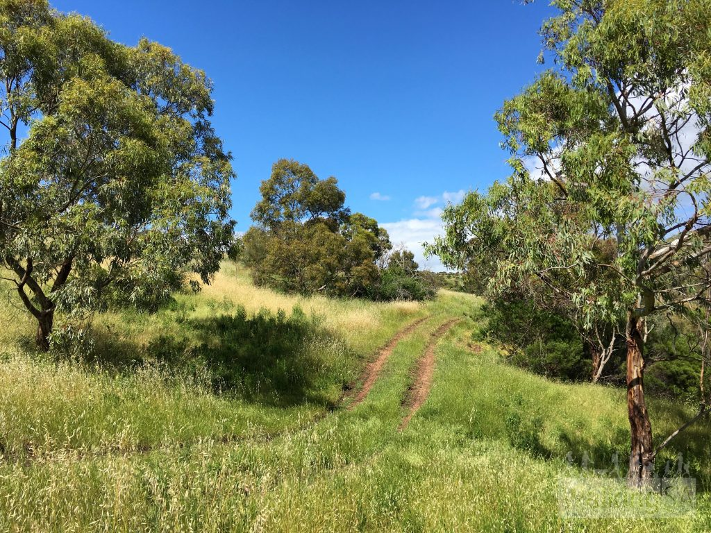 Other fire tracks are excellent and easy to follow, as the wander along hillsides and gullies