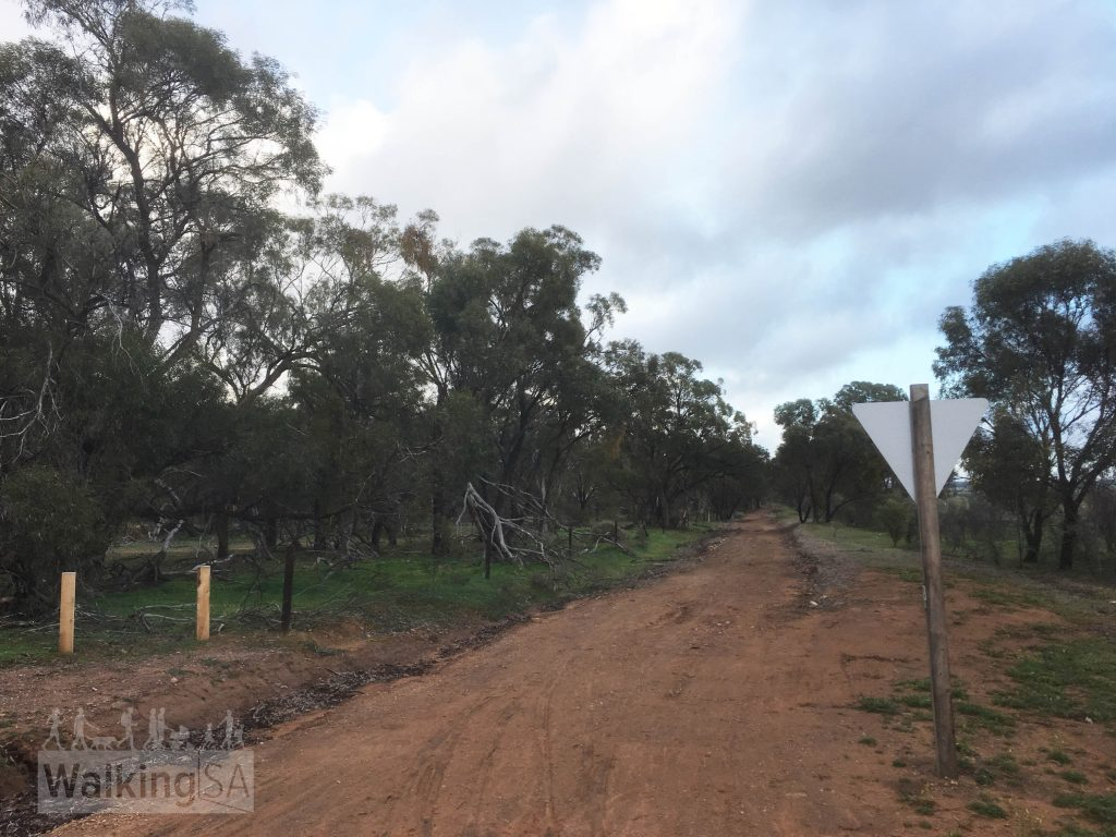 The Southern Flinders Rail Trail through Willowie Forest