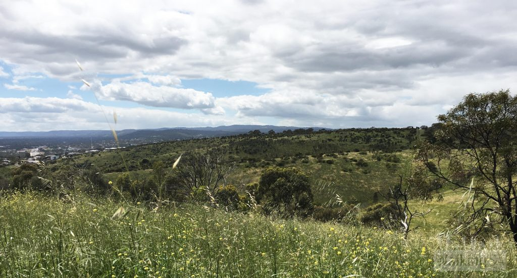 View of rolling grassy hills and Mt Lofty in O'Halloran Hill Recreation Park