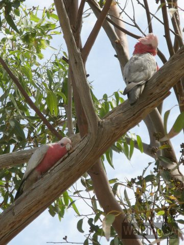 Birdlife on the Nurragi Conservation Reserve Walking Trail