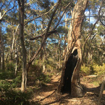 Burgess Hike and May Walk