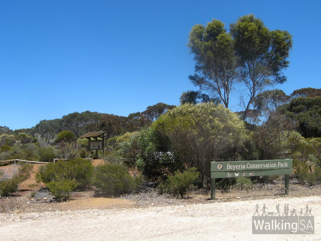 Carpark and trailhead for the Beyeria Walk, in Beyeria Conservation Park on Willsons Road