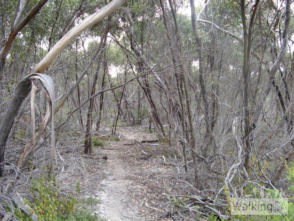 Hiking through shady trees near Sanderson Beach