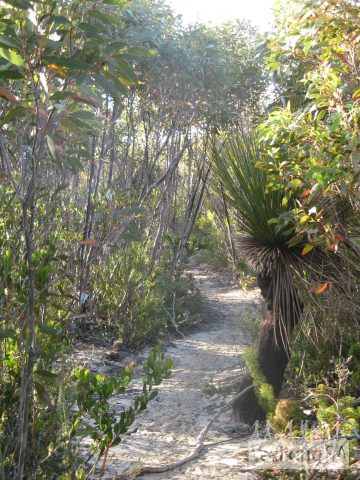 On Day 3, from Hakea Campground to Remarkable Rocks the trail consists of mostly 2-3 metre high plants with some shade