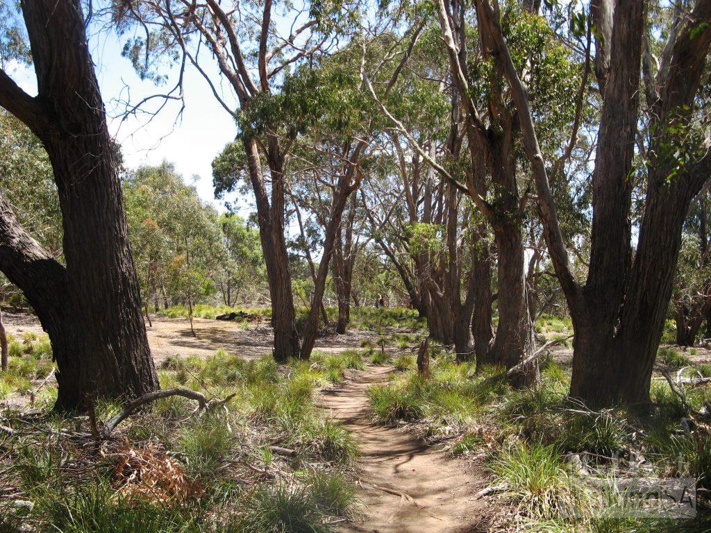 Shady trees on the Heritage Walk