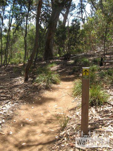 The Woodland Walk is a nice shady loop walk