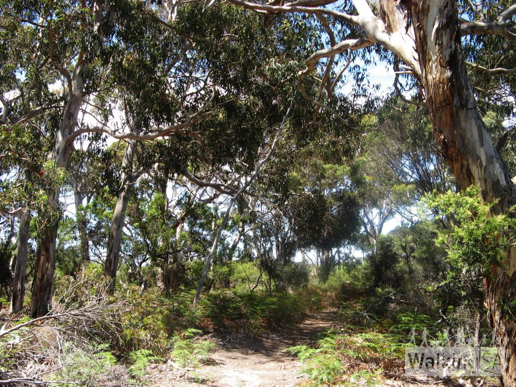 The entrance to Tea Tree Campsite is sheltered and shady