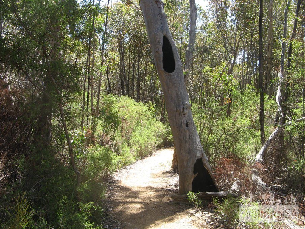 The walking path of the Platypus Waterholes Walk is quiet and shady around the waterhole loop