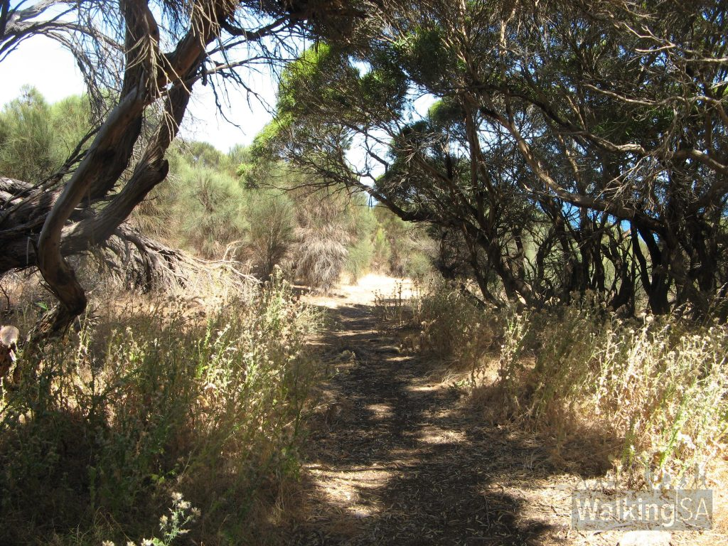 There are a few short shady sections along the hike