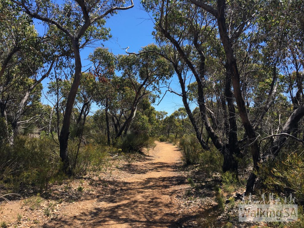There are some shady sections along the fire track. The walk is 1.9km of fire track followed by 200m of walking trail (one-way distances)