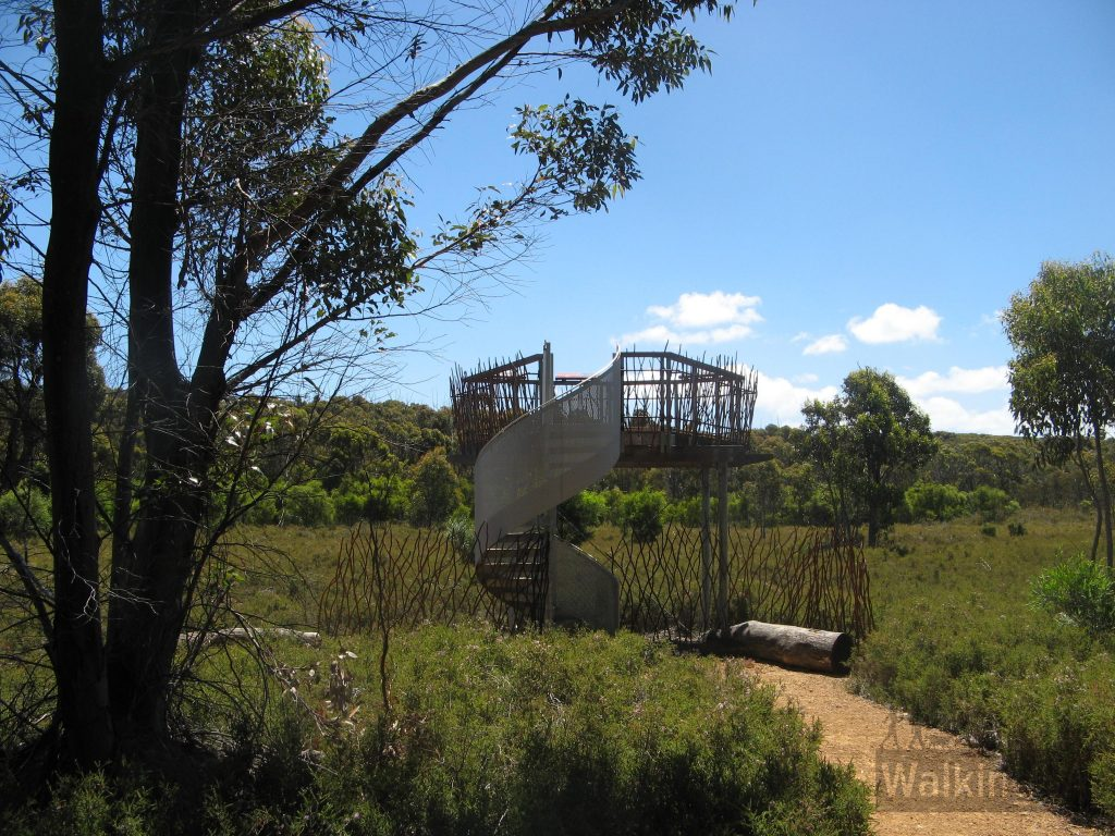 Viewing platform to see how the trees have recovered from the bushfires