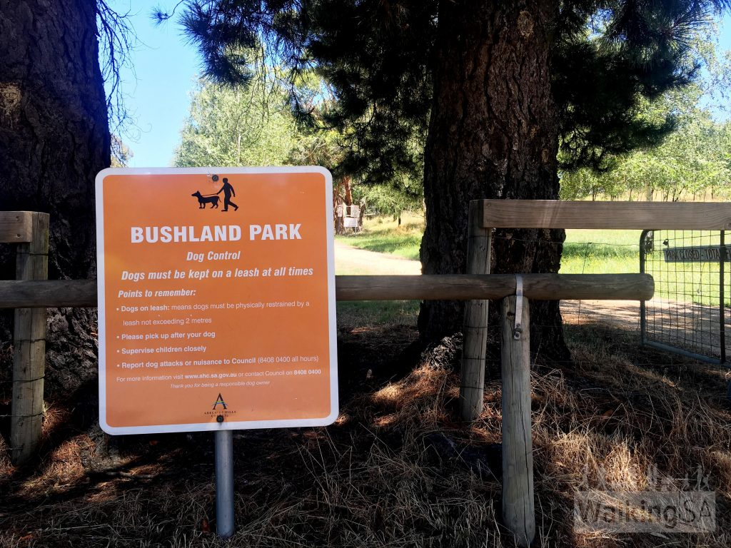 Dogs are permitted in the carpark and picnic area at Lobethal Bushland Park, but not the scrub beyond. There are no hikes where dogs are permitted.