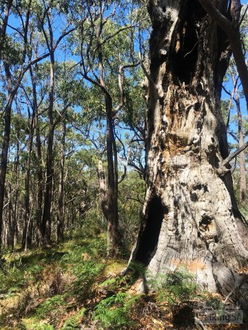 Exploring the forest on one of the hikes in Lobethal Bushland Park