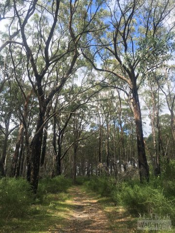 Following the fire track on the easy route through Porter Scrub Conservation Park