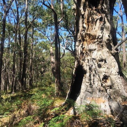 4 Hikes in Lobethal Bushland Park