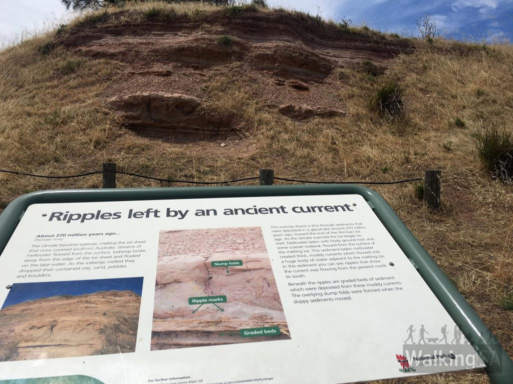 Hallett Cove Conservation Park contains outstanding geological sites. The outcrop pictured here shows a slice through sediments that were deposited in a glacial lake around 270 million years ago