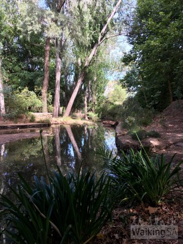 Second Creek flows through Michael Perry Botanic Reserve