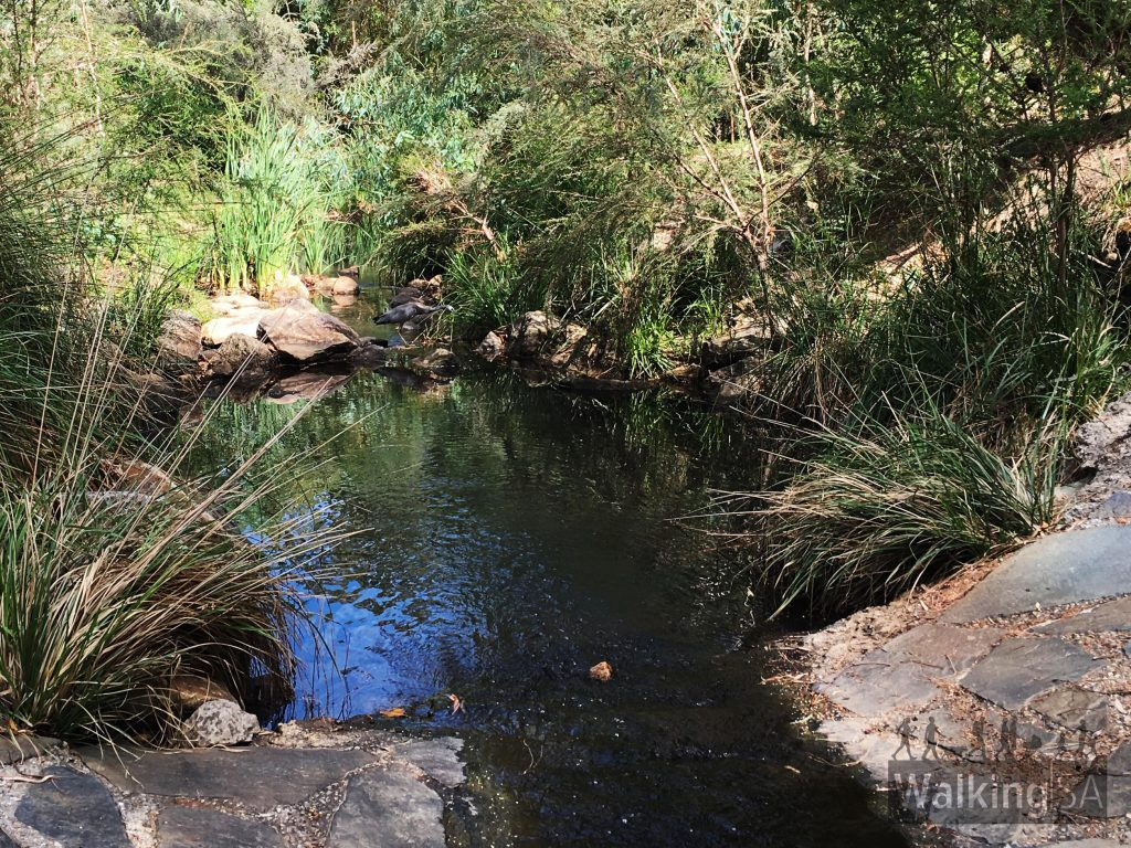Second Creek flows through the Michael Perry Botanic Reserve