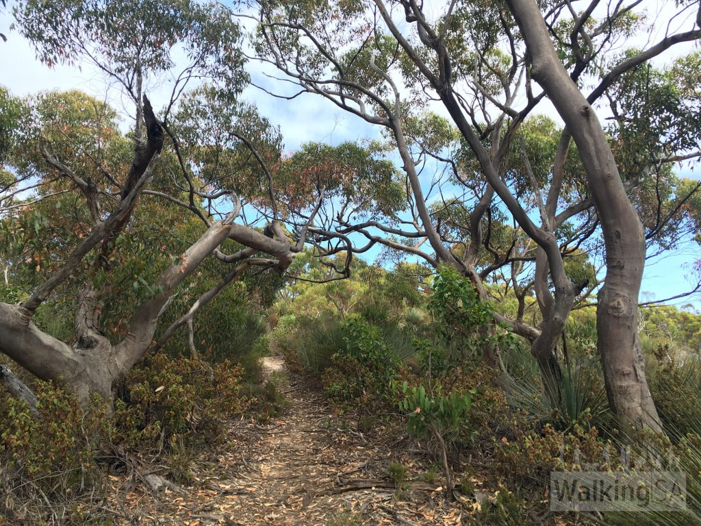 The Return Road Hike between Harveys Return Campground and the lighthouse keepers cemetery
