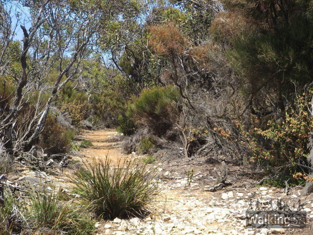 The Return Road Hike walking trail