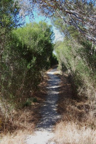 The Timber Creek Walk trail. Photo by Ron L (https://www.panoramio.com/photo/82787701)