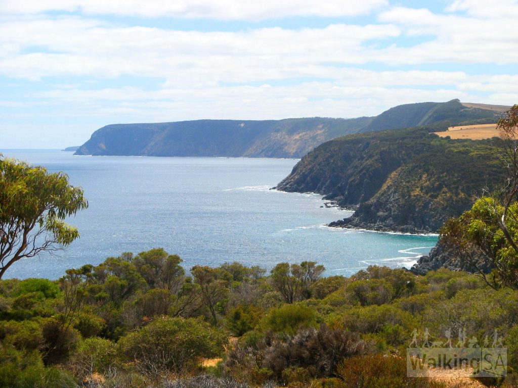The view from Scotts Cove Lookout on the Return Road Hike