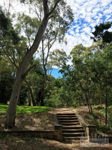 The walking path through Michael Perry Botanic Reserve