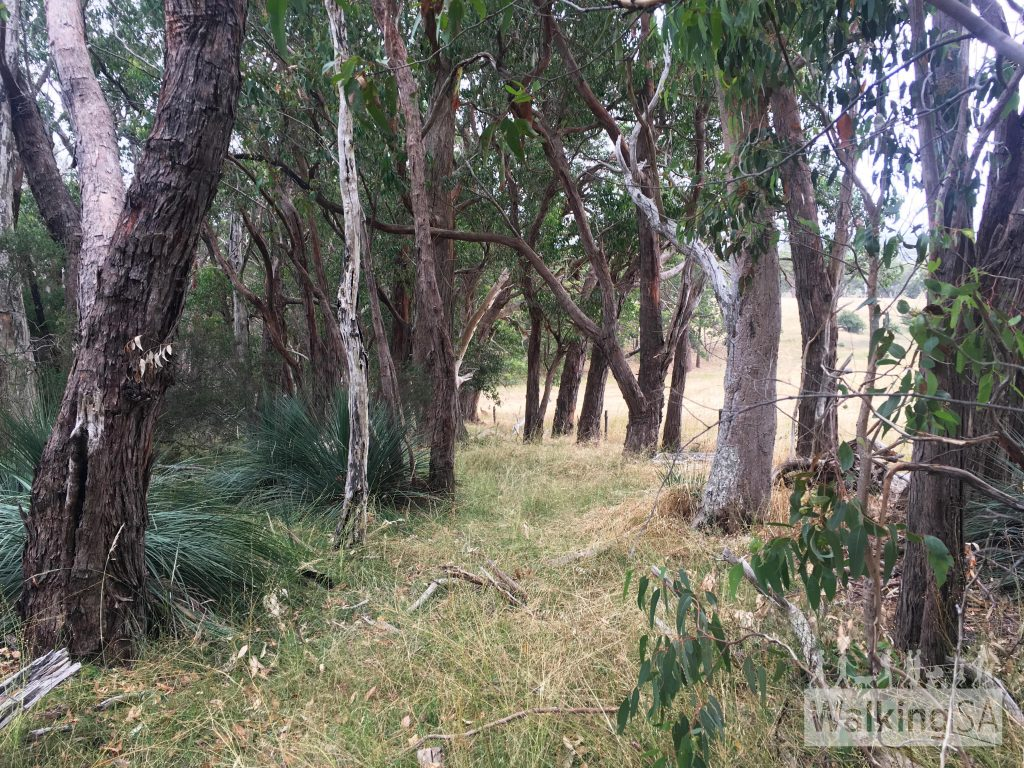 Walking along the Difficult Route. It can be challenging to follow the trail, which can become overgrown (such as the path here near F and the park boundary which is overgrown with grass)