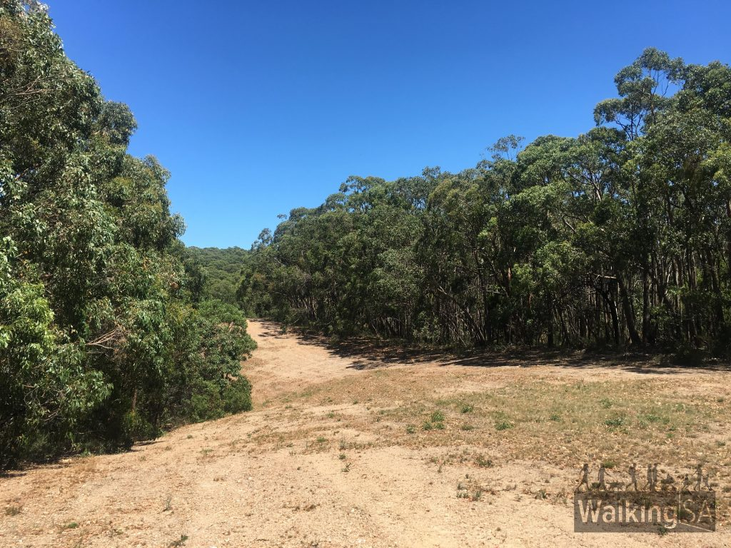 "Walking along the fire break isn't great, but it's only a few hundred metres long. The fire break is on the Purple/Brown route, between points H and J on the <a href=""https://www.walkingsa.org.au/wp-content/uploads/2017/01/Map-of-4-hiking-trails-in-Lobethal-Bushland-Park.pdf"">map</a>"
