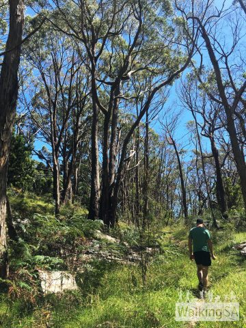 Walking on the purple/brown and blue route in Lobethal Bushland Park