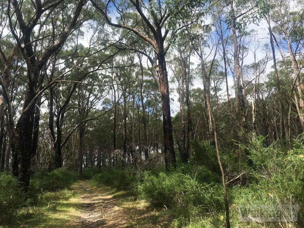 Walking through the forest in Porter Scrub Conservation Park