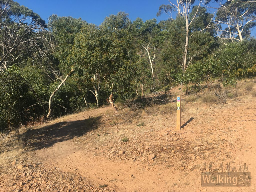 Bottom end and start of the Wildflower Wander off of the Pink Gum Loop