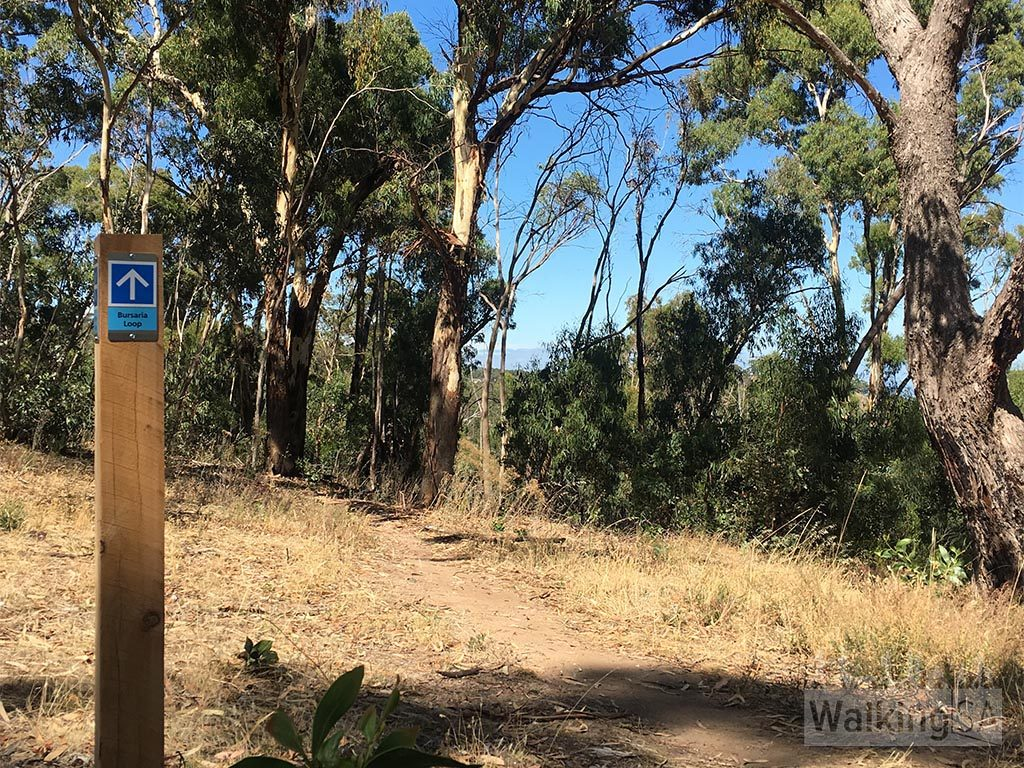 Bursaria Hike, Anstey Hill Recreation Park
