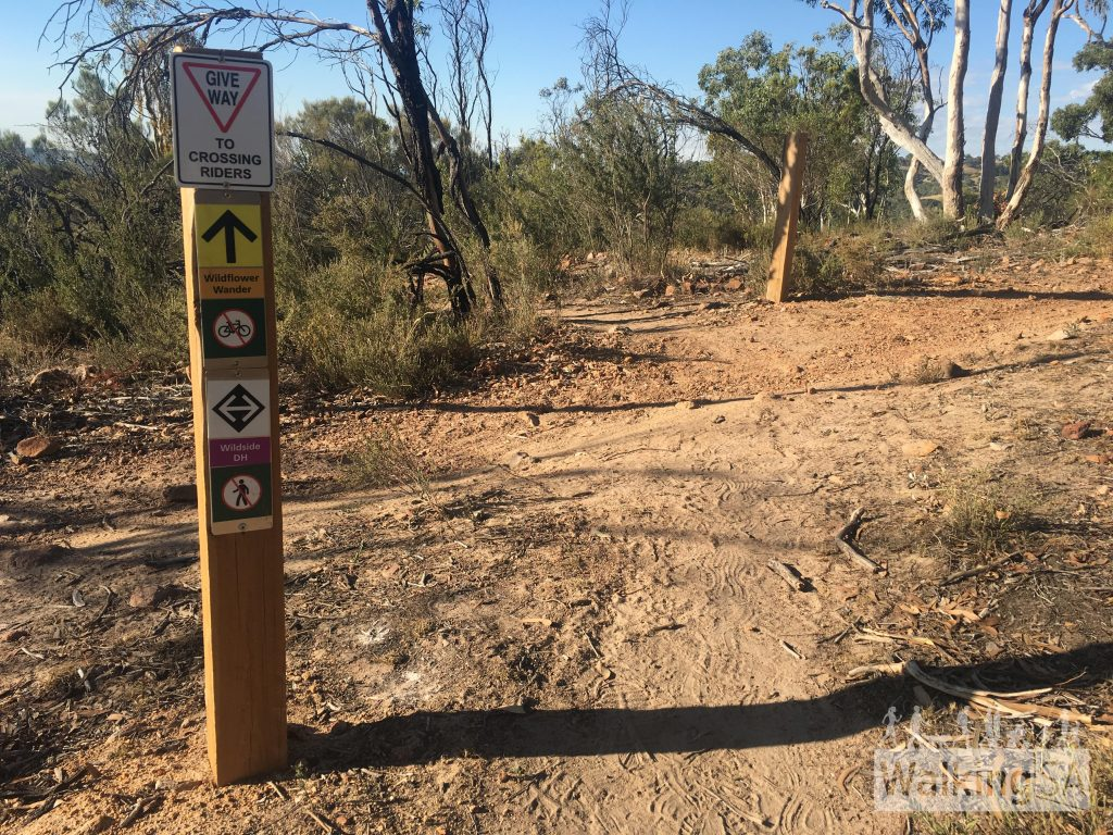 The Wildflower Wander crosses the mountain bike track (Wildside Downhill), so walkers should use caution when crossing the track