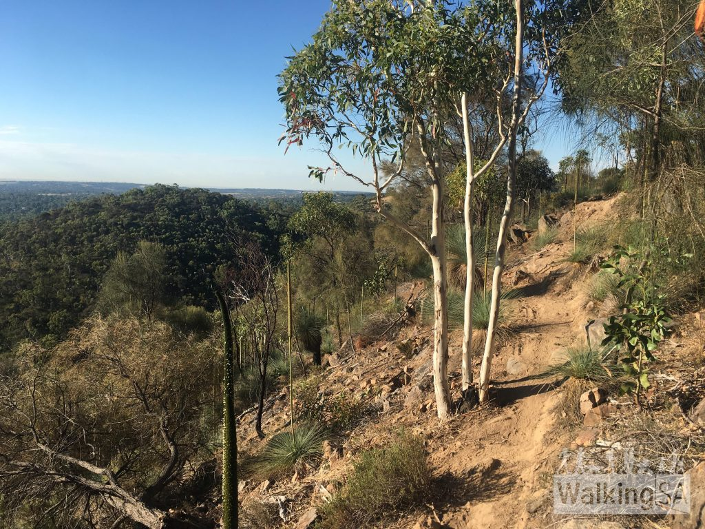 The Wildflower Wander hike has views over some of the foothills and Adelaide Plains
