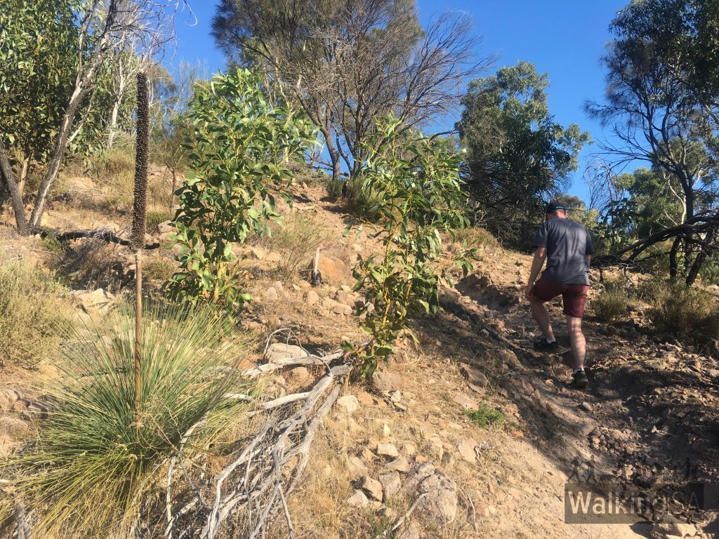 The Wildflower Wander is a steep hike up Anstey Hill, with some loose rocks