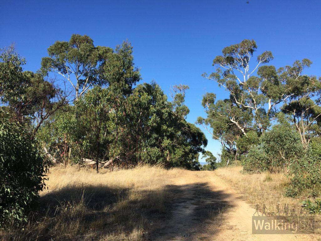Walking along the fire track on the Bursaria Hike