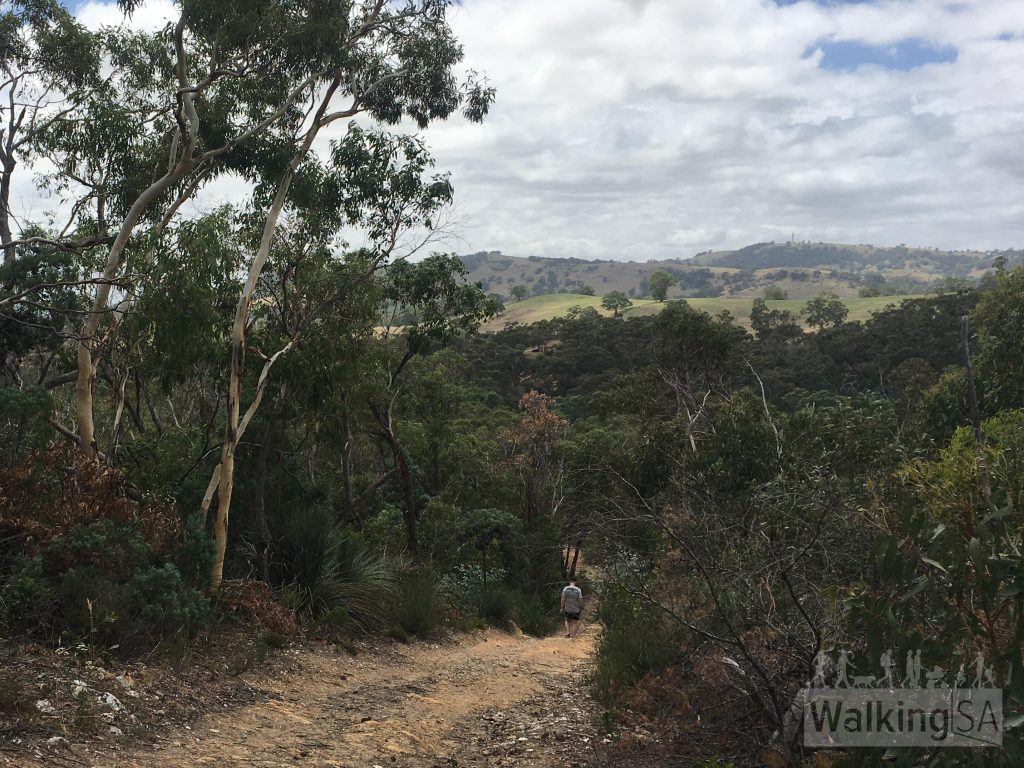 A steep descent down the fire track on the Hale Conservation Park Loop
