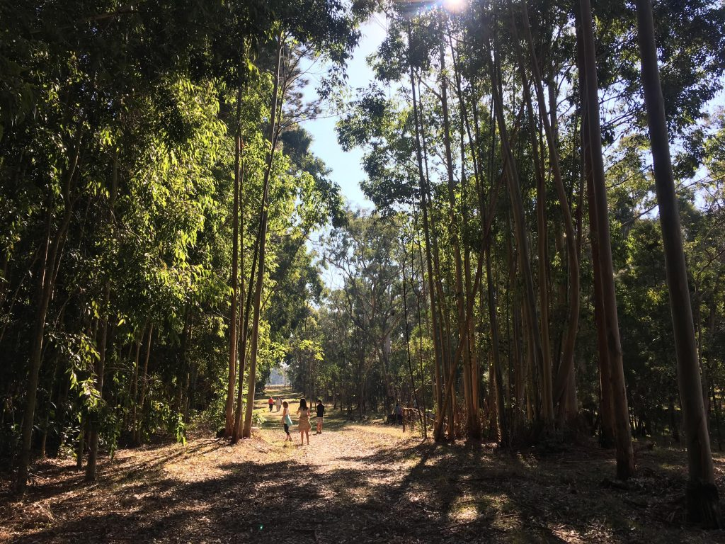 Chookarloo Walk, Kuitpo Forest