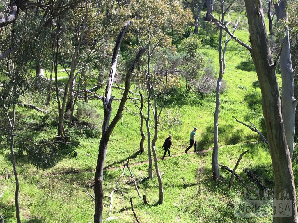 Hiking up the well graded track on the Mt Remarkable Summit Hike