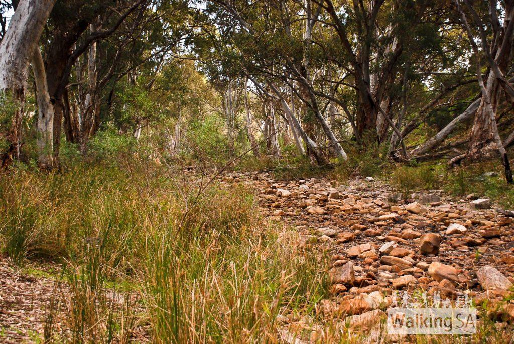 Mambray Creek
