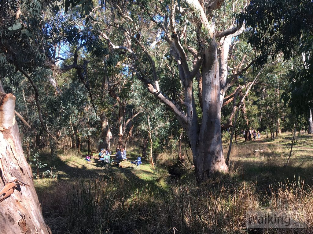 Picnic area on the Chookarloo Walk