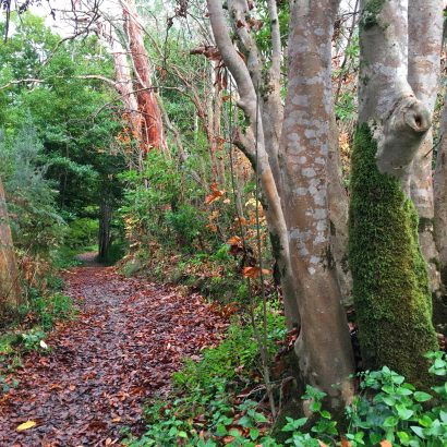 RSL Walk, Belair National Park