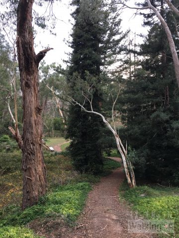 The Adventure Loop Trail passes the avenue of sequoias, a WW2 memorial